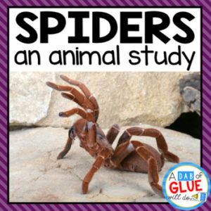 Spiders Animal Study Unit by A Dab of Glue Will Do